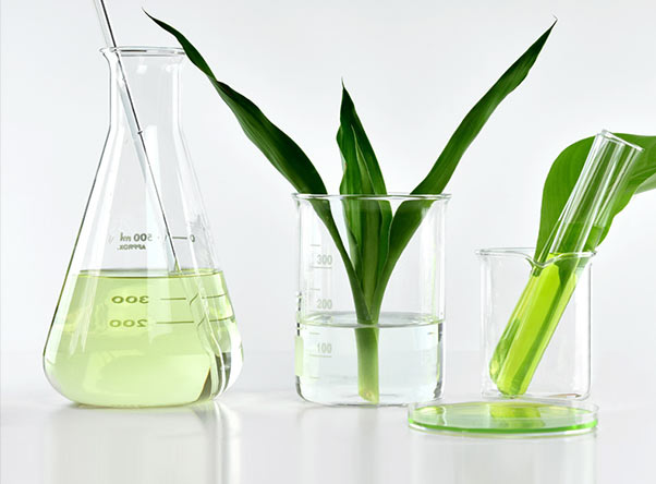 Flasks and beakers with plant leaves and light green liquid.